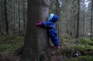 Pikku puun halaaja