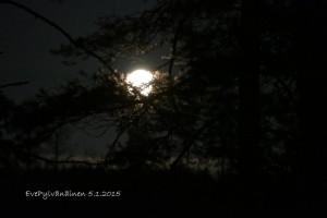 Kuun pesä