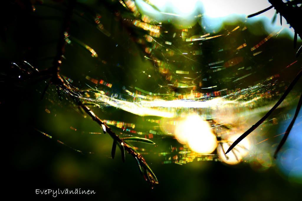 Hämähäkin sateenkaaret :)