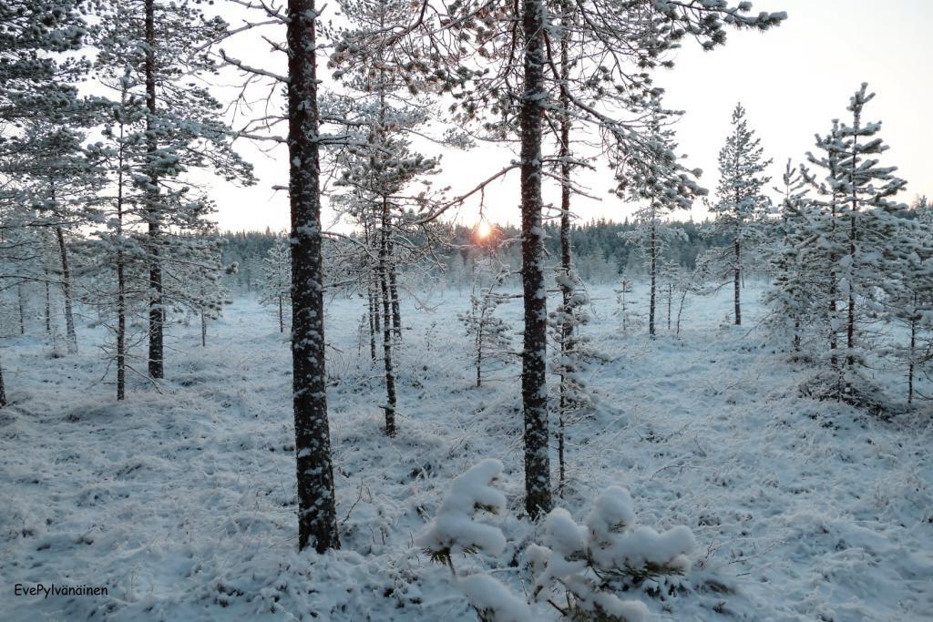 Siikaneva 7.1.2016. Pakkasta -21